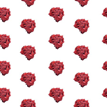 Hand Drawn  Red Rose seamless pattern on white background. Design for wrapping paper, wedding invitation, birthday, Valentines Day, mothers day, cloth