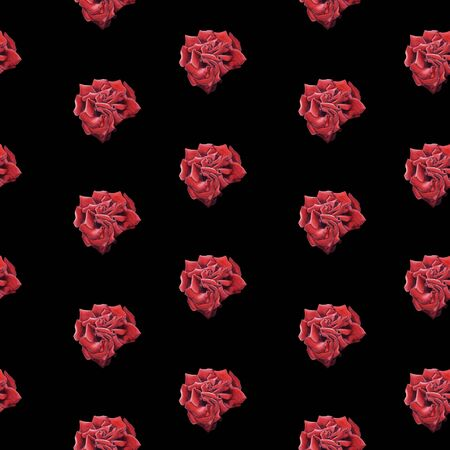 Hand Drawn  Red Rose seamless pattern on black background. Design for wrapping paper, wedding invitation, birthday, Valentines Day, mothers day, cloth Stock Photo