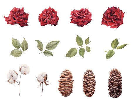 Hand drawn  set of winter plants. Illustration of rose flowers, leaves and pine cones isolated on white background. Design element for greeting card, magazine, banners