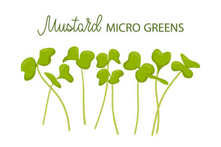 Hand drawn mustard microgreens. Healthy food. Sprouted seeds with green leaves isolated on white background. Edible plants for healthy nutrition. Vector illustration in flat cartoon style.