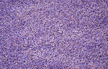 Purple colored lavander seeds background or backdrop photo