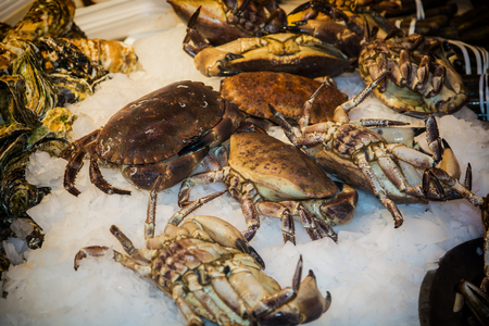 fisheries: Fresh marine crabs displayed on crushed ice at a seafood market or fisheries to be used in gourmet seafood cuisine and cookery