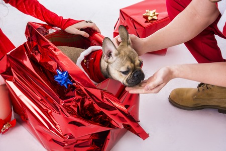 Handsome young man and pretty young woman in Santa Claus hat and costume, with pug dog, standing holding colorful festive Christmas gifts to celebrate the season, on white background Stock Photo