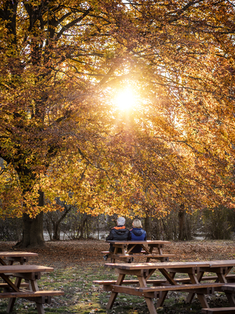 View of colorful yellow tree with elderly couple relaxing on bench beneath. Stock Photo