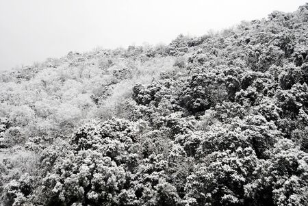 Snowy bushes of Olympus mountain. Sparmos village, Thessaly region, northern Greece.