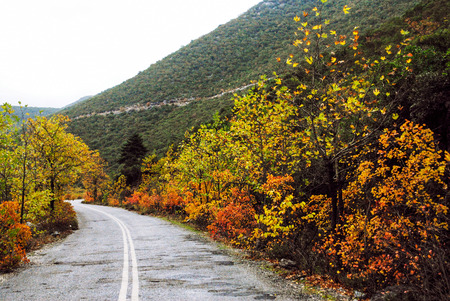 Autumnal colors along countryside road on mount Taygetus. Peloponnese region, southern Greece.
