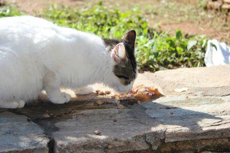Stray cats eating cat food outside Zdjęcie Seryjne