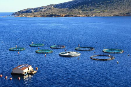 Aquaculture settlement, fish farm with floating circle cages around bay of Attica in Greece.