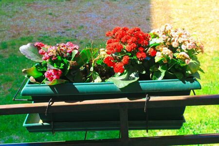 Flower planter in Athens, Greece
