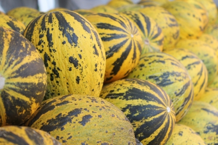 sapid: Yellow and green melons at the market stand from Turkey