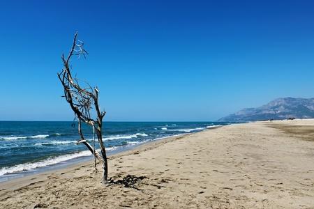 Beach Sand and dry tree - Patara, Turkey photo