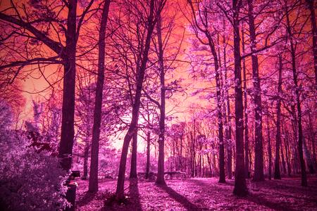infrared trees Imagens