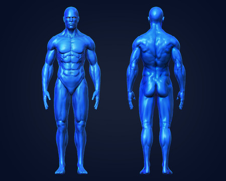 3D Rendering, Conceptual human muscle, Blue shade anatomy man front and back view on dark background, with clipping path.