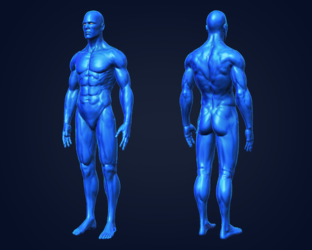 3D Rendering, Conceptual human muscle, Blue shade anatomy man front and back perspective view on dark background, with clipping path.