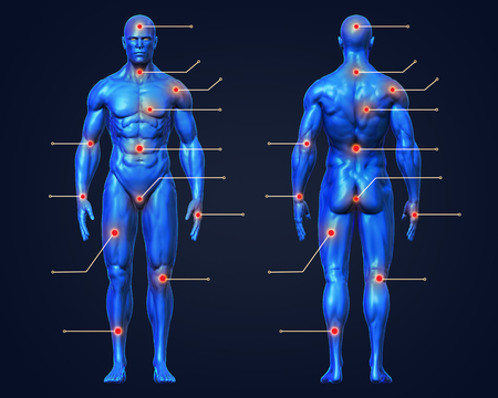 3D Rendering, Conceptual human muscle anatomy man red joint pain points medical infographics, for health care therapy or sport concepts, Blue shade front and back view on dark background, with clipping path. Imagens