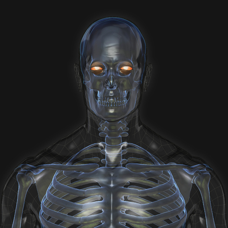 3D Rendering, Conceptual human organs and muscle, Reflect shade anatomy man X ray bones, front view on dark background, Clipping path.