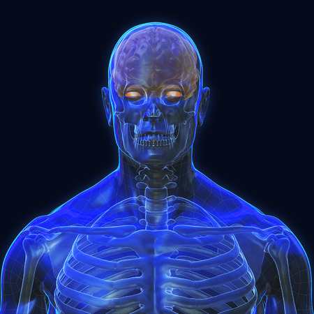 3D Rendering, Conceptual human organs and muscle, Blue shade anatomy man X ray bones and Brain, front view on dark background, Clipping path. Stock Photo