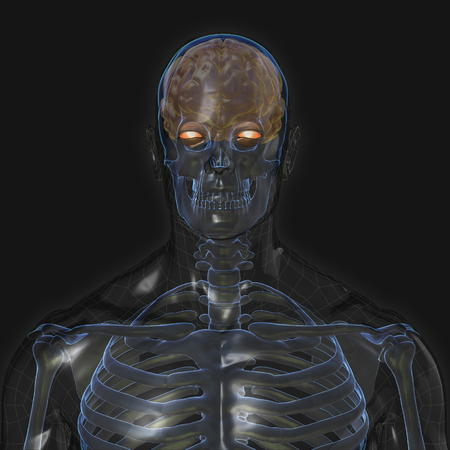 3D Rendering, Conceptual human organs and muscle, Reflect shade anatomy man X ray bones and Brain, front view on dark background, Clipping path.