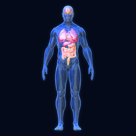 3D Rendering, Conceptual human organs and muscle, Blue shade anatomy man X ray Bones Heart lung brain liver, Full body front view on dark background, Clipping path.