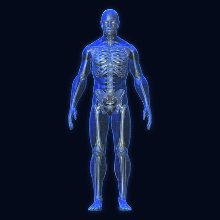 3D Rendering, Conceptual human organs and muscle, Blue shade anatomy man X ray bones, Full body front view on dark background, Clipping path.