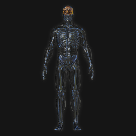 3D Rendering, Conceptual human organs and muscle, Reflect shade anatomy man X ray bones, Full body front view on dark background, Clipping path.