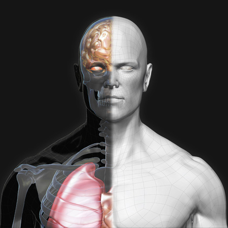 3D Rendering, Human organs and muscle, Gray shade anatomy man, Half X ray Bones Heart lung brain liver, Face front view on dark background, Clipping path.