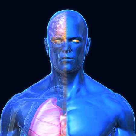 3D Rendering, Human organs and muscle, Blue shade anatomy man, Half X ray Bones Heart lung brain liver, Face front view on dark background, Clipping path.