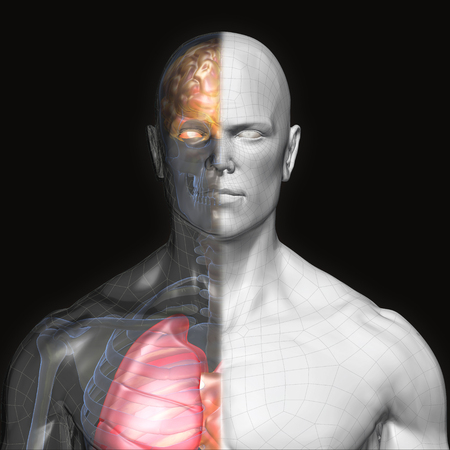 3D Rendering, Human organs and muscle, Gray shade anatomy man, Half X ray Bones Heart lung brain liver, front view on dark background, Clipping path. Stock Photo