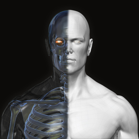 3D Rendering, Human organs and muscle, Gray shade anatomy man, Half X ray Bones Face front view on dark background, Clipping path. Stock Photo