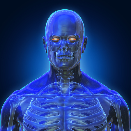 3D Rendering, Conceptual human organs and muscle, Blue shade anatomy man X ray bones, front view on dark background, Clipping path.