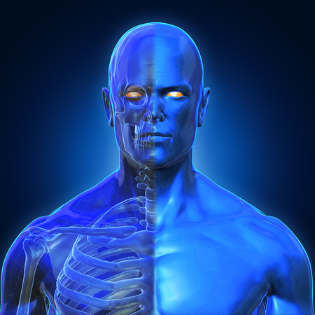 3D Rendering, Human organs and muscle, Blue shade anatomy man, Half X ray Bones Face front view on dark background, Clipping path.