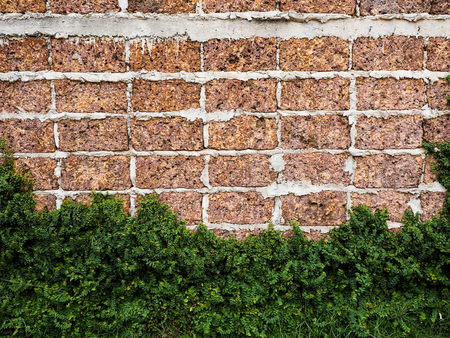 Red brick walls large blocks of Velcro grass clinging to the walls Stock Photo