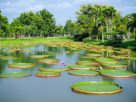 Huge floating lotus, Giant Rama 9 Park bangkok thailand