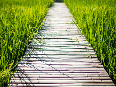 Bamboo bridge in the middle of rice field Stock Photo