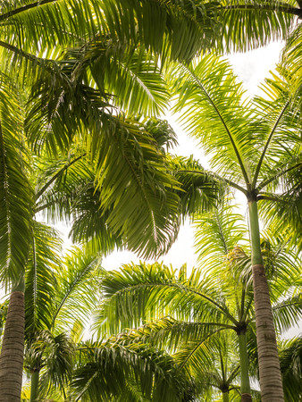 palm trees viewed from below Banque d'images - 121744670