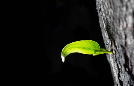 Soft new green shoot from young tree new growth the dark shadow background.