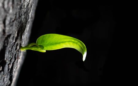 New young green shoot from young tree new growth the dark shadow background. 写真素材