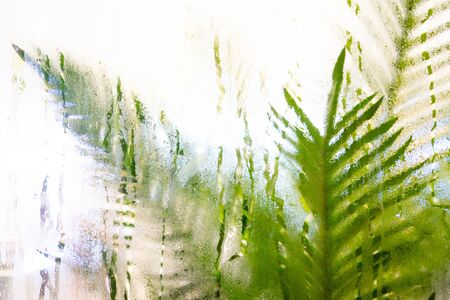Drops of rain on window with green leaf background abstract bokeh lights