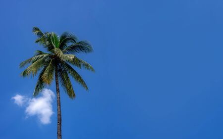 Coconut trees with the sky in the background. copy space background for text. Фото со стока