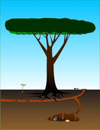 cutaway drawing: Cutaway view of ant colony near an old tree and seedling.