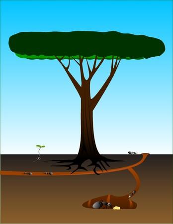 cutaway drawing: Taglio vista formicaio vicino a un vecchio albero e la piantina.