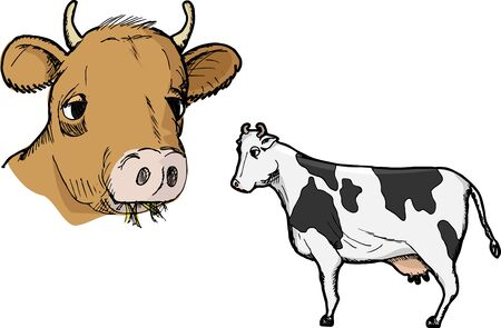 Illustration of two types of cows isolated on white Illustration