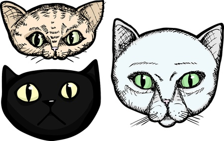 Three hand-drawn cat head portrait illustrations isolated on a white background Çizim