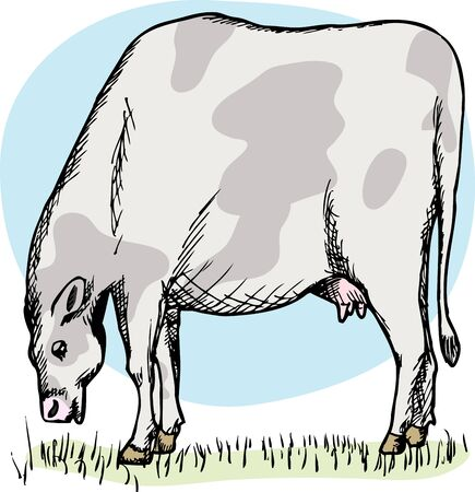 Illustration of cow grazing in a green field over white Stock Vector - 14088755