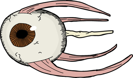 Hand drawn model of human eye with muscles