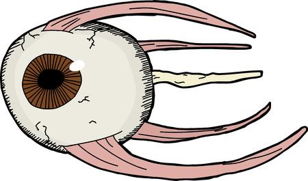 Hand getekende model van het menselijk oog met spieren
