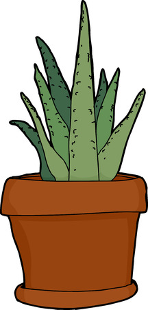 plant pot: Green aloe plant in pot over isolated background