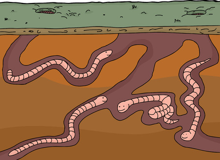 Cartoon worms in underground cross section with white background