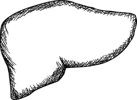 Single hand drawn outline human liver over white Illustration