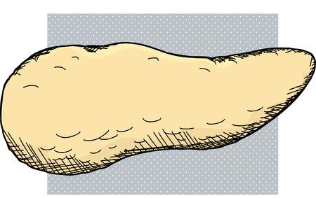 Human pancreas organ cartoon over white background Illustration